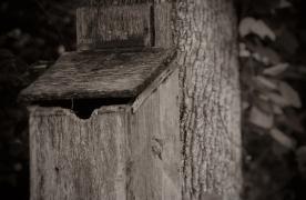 Homewood at Plum Creek